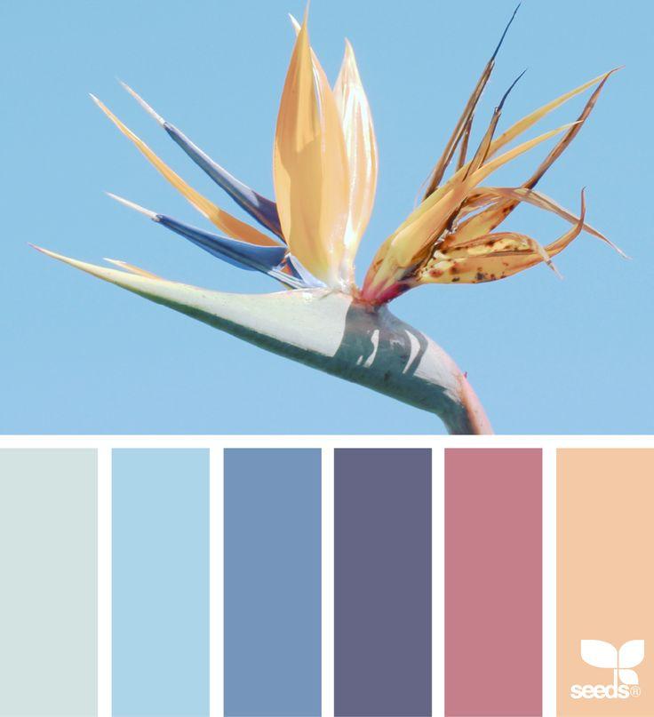 Color Flora - https://www.design-seeds.com/in-nature/flora/color-flora-11