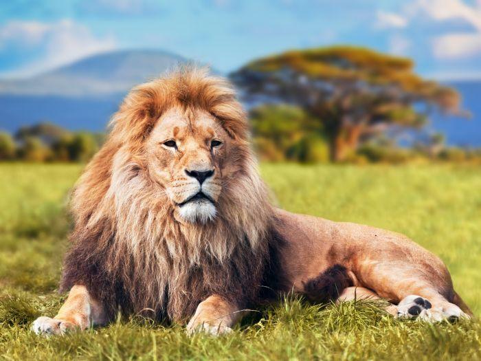 Where do Lions Live #WhereDoLionsLive