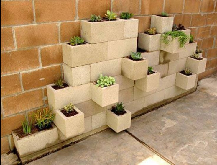 Outdoor plants for small spaces