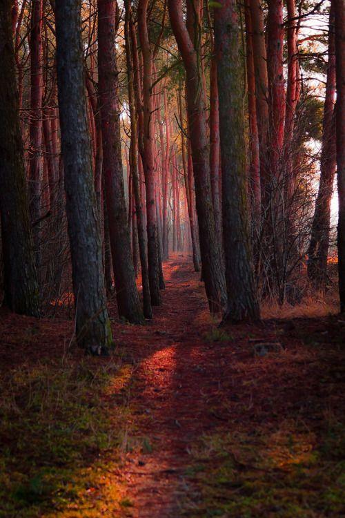 madishy:Path by Mariusz