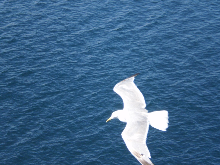 This seagull followed our boat for miles