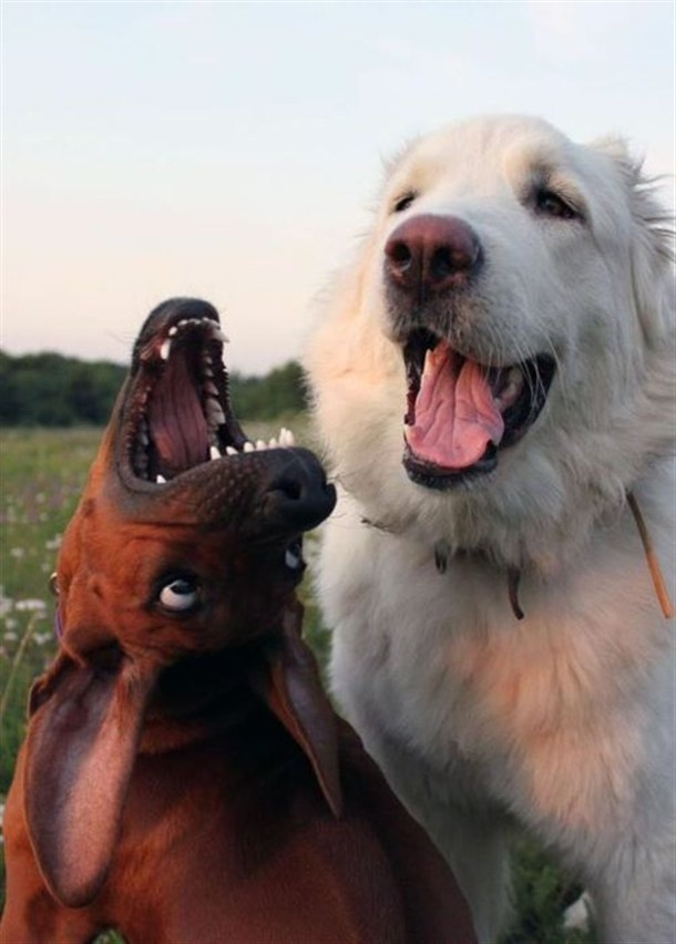 Everybody has a crazy friend. Even dogs...