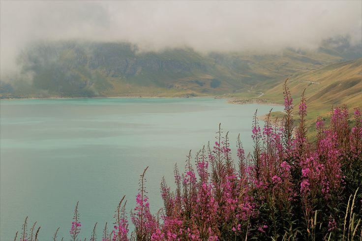Fleurs au bord d'un lac