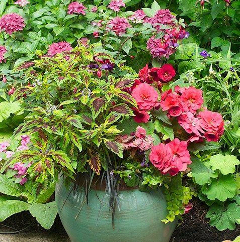 1000 images about shade containers on pinterest container gardening planters and shade plants - Container gardens for shade ...