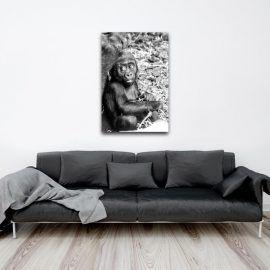 """Découvrez chez COOGEE (www.coogee.io), votre galerie de photo d'art en ligne en édition limitée,   """"Bébé gorille """" une photographie de Sandra Deslande. Disponible en 30 exemplaires sur divers supports et formats à partir de 25€ sur coogee.io #Photographie #Art #EditionLimitée #coogeegallery #deco #decoration #editionlimitee #photodeco #photographie #art #limitededition  #singe #animaux"""