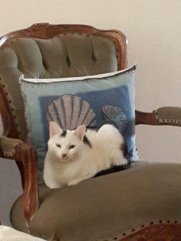 Cat. Cute cat. Kitty. Fancy pants.