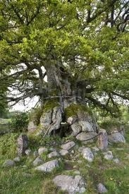Kvill Oak in Smaland, Sweden where my grandpa was born. This is said to be the oldest oak in Europe.