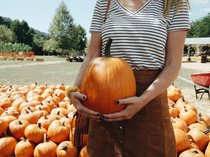 The perfect pumpkin! #fall #pumpkin