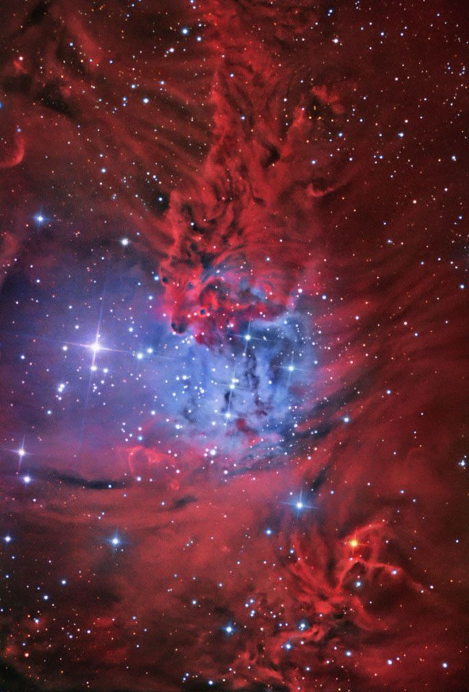 red fox fur nebula - photo #19