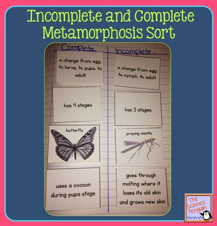 Incomplete and Complete Metamorphosis
