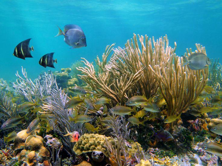 Conheça os mais incríveis recifes de corais pelo mundo