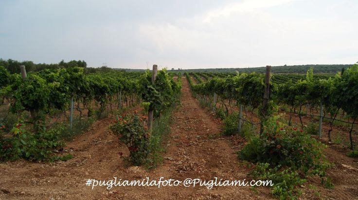 Azienda agricola Cannito