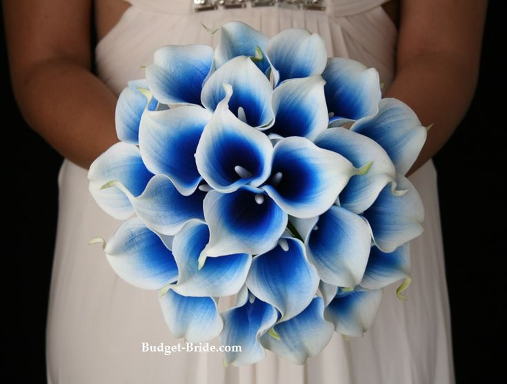 Royal Blue Halo Calla Lily