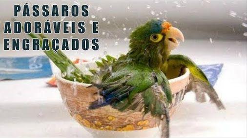Compilação De Vines Dos Pássaros Mais Adoráveis e Engraçados https://www.youtube.com/watch?v=ivkBOOTJ514