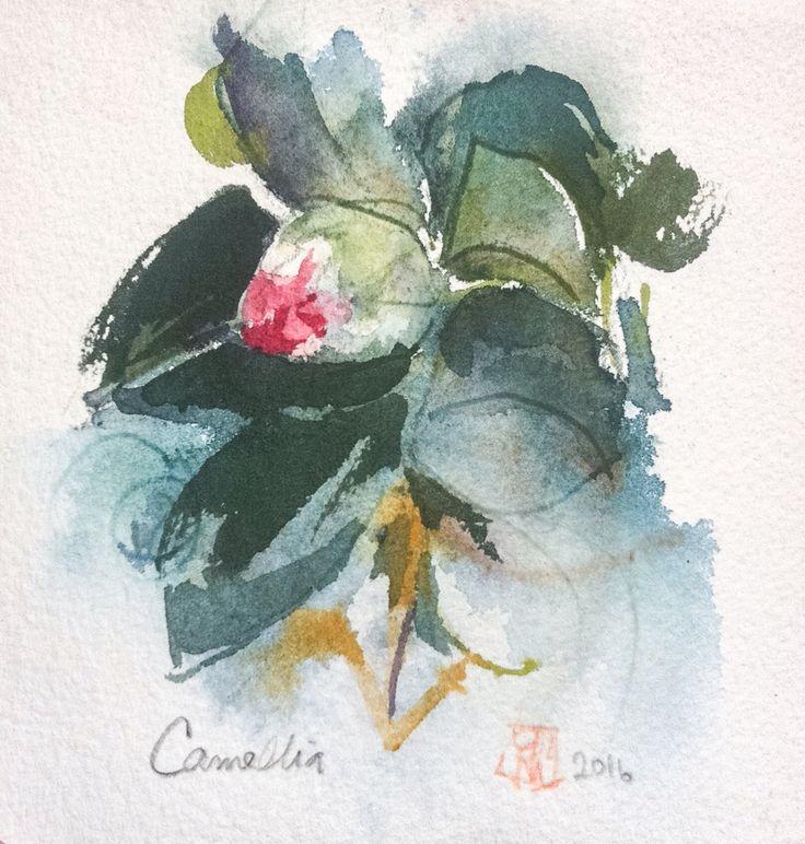 Camellia. Watercolor. Erik Reinert 2016.