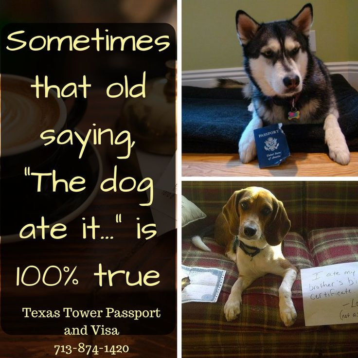 Request For Birth Certificate Letter%0A Studies show dogs prefer eating important documents over notsoimportant  documents  doglover