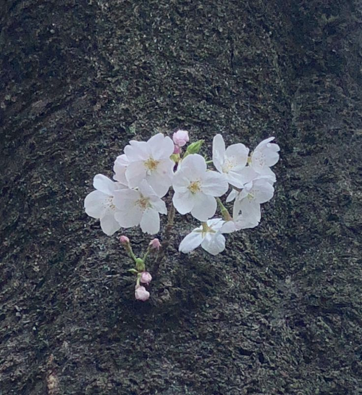 赤坂 桜坂にて
