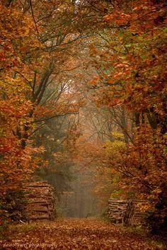 kathy jennings autumn print