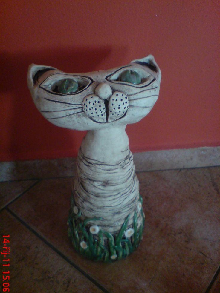 Kočka v kopretinách.