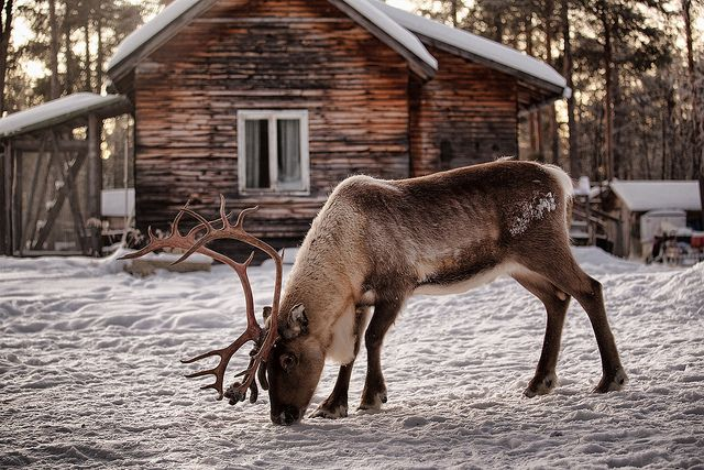 go to Finnland in winter. Stay in a hut, warm your…