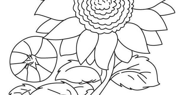 Wow 28 Gambar Bunga Matahari Kartun Hitam Putih Setelah Mengetahui Manfaat Dari Mewarnai Silahkan Lanjutkan Den Menggambar Bunga Matahari Gambar Bunga Gambar