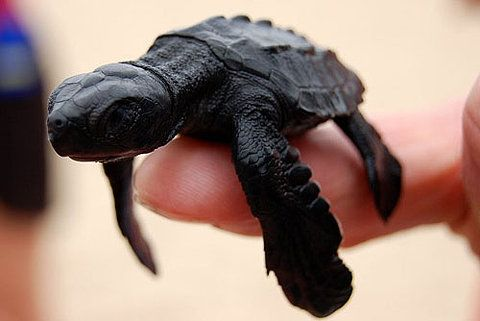 I have rediscovered my love of sea-turtles lately . . .