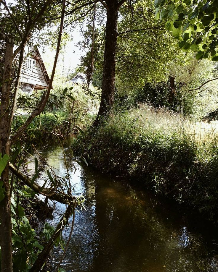 #nature #lost #river #green #cosy