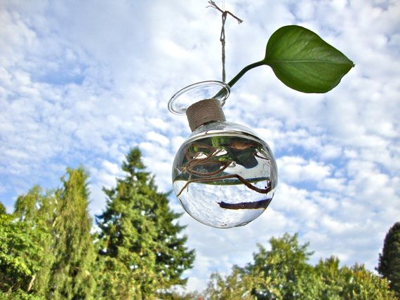 Little Hanging Glass Vase Without Plant / Modern by eGardenStudio, $15.00