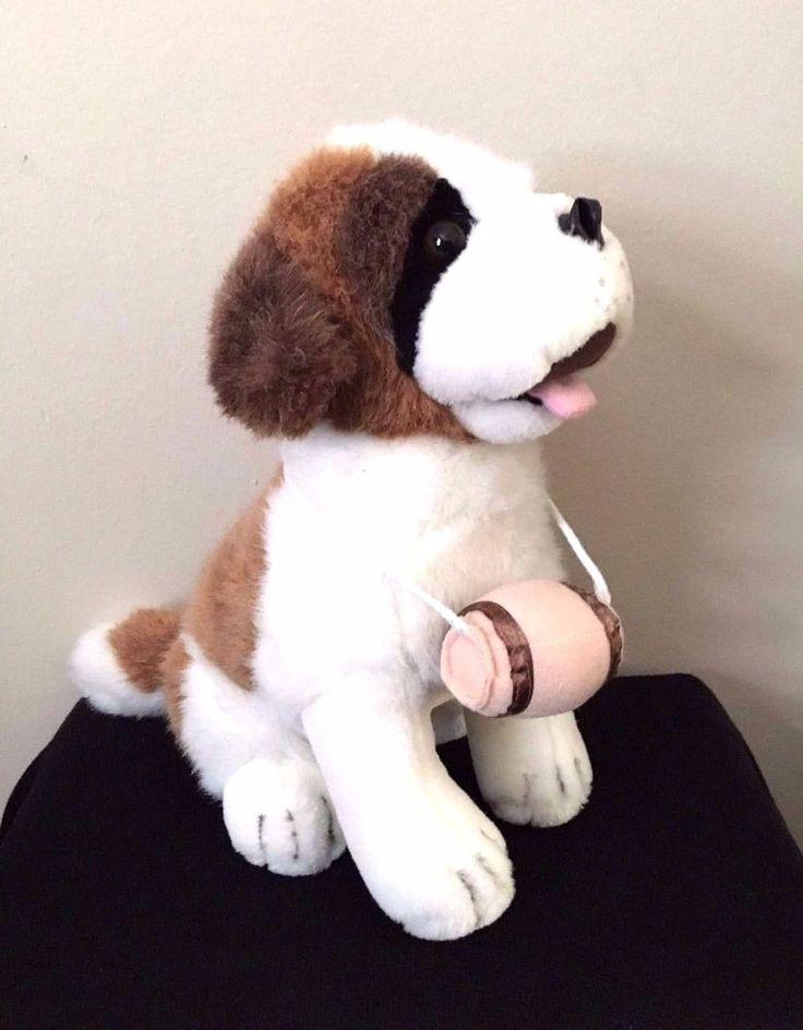 St Bernard Dogs For Sale In Los Angeles