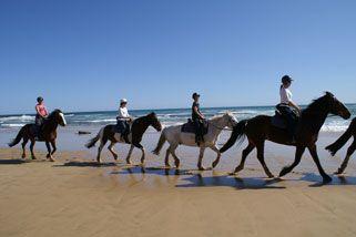 Beach Horse Ride In The Mornington Peninsula