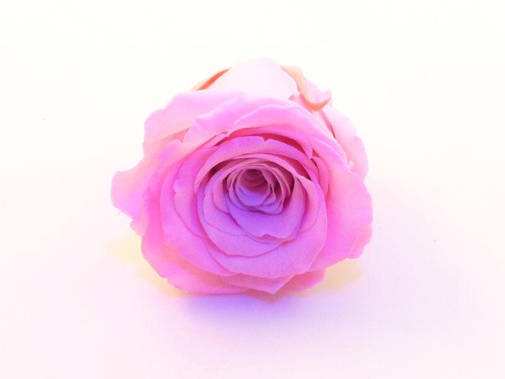 rose éternelle de couleur Rose, parfait pour une décoration florale de longue durée.