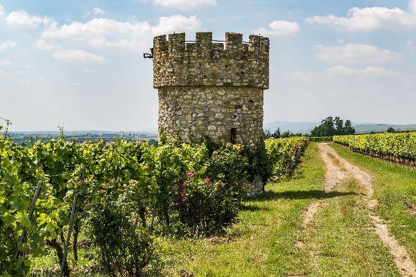 Drei Tipps für die Weinwanderung in Rheinhessen für Naturbegeisterte mit Ausdauer, Familien und Feinschmecker. Foto: Wein Weinbergshäuschen Flörsheim-Dalsheim