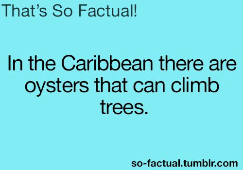In the Caribbean there are oysters that can climb trees