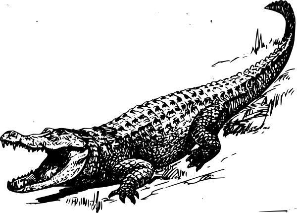Mejores 45 imágenes de Crocodile Tattoo Outline en Pinterest ...