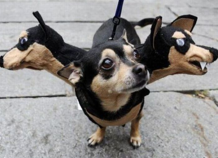 Google Image Result for http://3.bp.blogspot.com/_Fzq94YVbHHM/TMB9jes70kI/AAAAAAAA6pw/E1N7hThCZ1g/s1600/Halloween_Costumes_for_Dogs_14.jpg