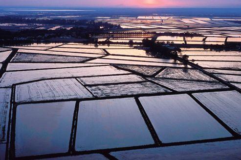 La délicate réhabilitation des vieilles rizières de Camargue