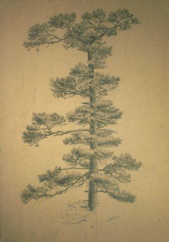 Untitled (Single Pine Tree), 1874, Carl von Marr, Museum of Wisconsin Art, 0110.