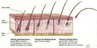 How To Stop Hair Loss and Excessive Shedding Naturally ~ HowToBlackHair.com
