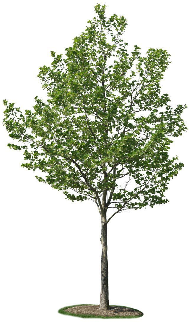CROPPED TREES COLLECTIONS http://www.archivitamins.com/our-finest-cropped-trees-collection/