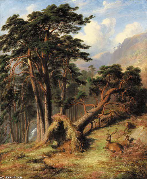 Étude Dans Glen Quoich, Mar Forêt - Après une Gale de James William Giles (1801-1870, United Kingdom)