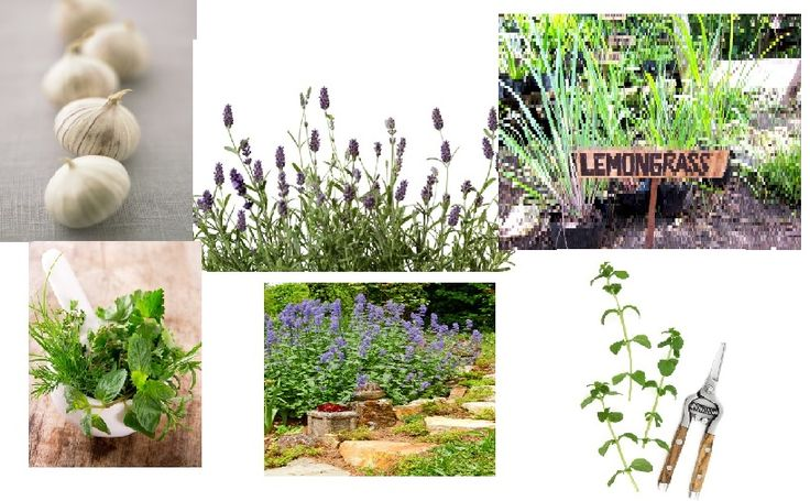 There are a lot of plants that can help repel mosquitoes. Read more about them: http://www.jcehrlich.com/blog/plants-which-repel-mosquitoes/