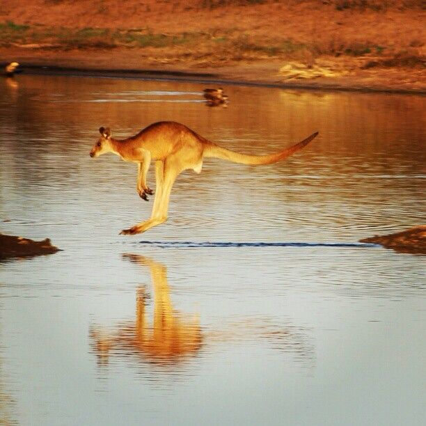 (via Photo by seeaustralia • Instagram) Nice shot. S