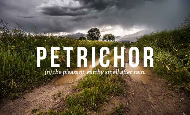 Again... I've LOVED the smell of earth and soil after a rain and never knew this beautiful smell had a name.