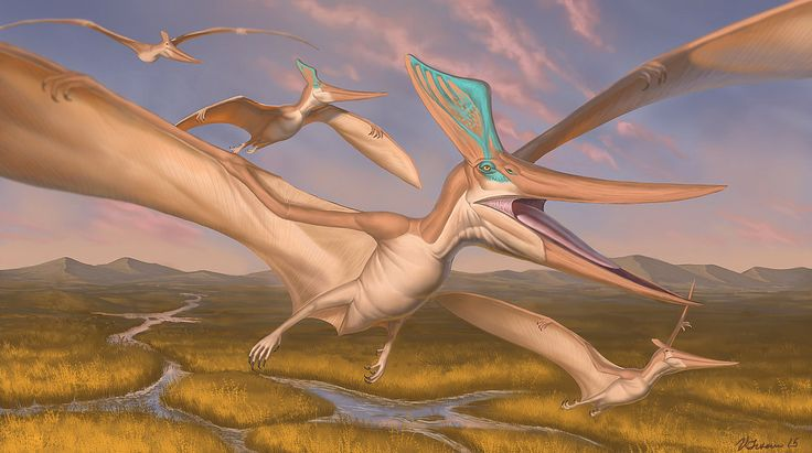 Pteranodon sternbergi by Ryukurei.deviantart.com on @DeviantArt