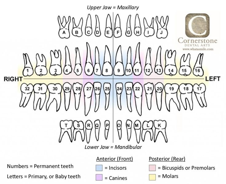 dental fee schedule filetype pdf