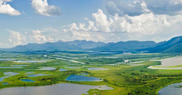 O Pantanal é a maior planície alagável do mundo e abrange parte do Mato Grosso e do Mato Grosso do Sul, além do Paraguai. Na época das cheias, a paisagem modifica-se, pois até 80% da região se inunda. Em Corumbá (Mato Grosso do Sul), há uma exposição permanente sobre o bioma, na Estação Natureza Pantanal. Conheça a fauna e a flora de diferentes biomas brasileiros - Fotos - Meio Ambiente