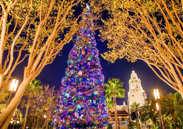 Disneyland's Christmas season with entertainment, decorations, and attractions.  tami@goseemickey.com