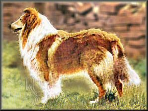 Rough Collie Breed Council - Protected affixes - Ladypark Rough Collies