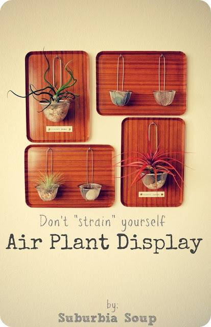 15 best images about air ferns on pinterest gardens wedding table centerpieces and air plant. Black Bedroom Furniture Sets. Home Design Ideas