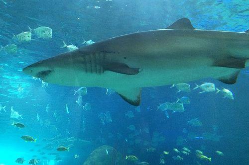 Shark - Apr 2014